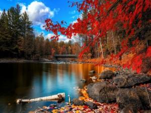 Hojas otoñales en un río
