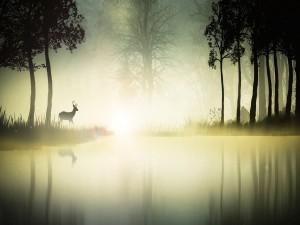 Ciervo reflejado en un lago brumoso