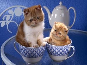 Gatitos en una taza de té