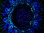 Girasol azul