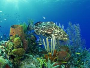 Gran pez en el fondo marino