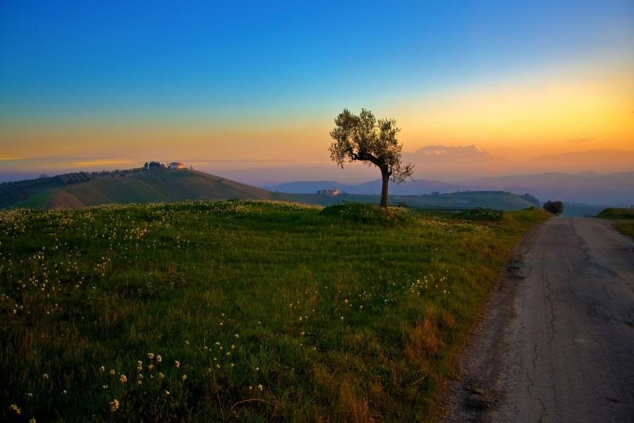 Bonito amanecer en el campo