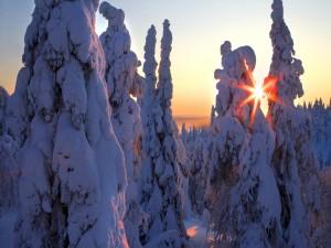 Sol brillando entre los árboles nevados