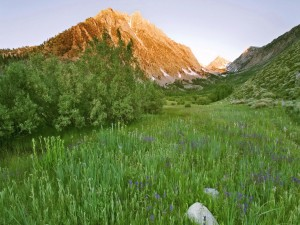 Prado verde bajo la montaña