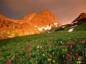 Flores silvestres bajo la montaña
