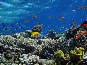 Bonitos peces tropicales bajo el mar