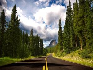 Carretera entre pinos verdes