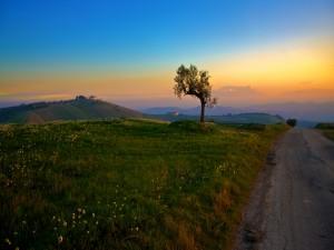 Árbol junto a una carretera
