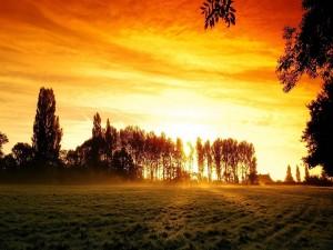 Rayos de sol entre los árboles