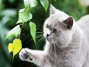 Gato gris observando las hojas