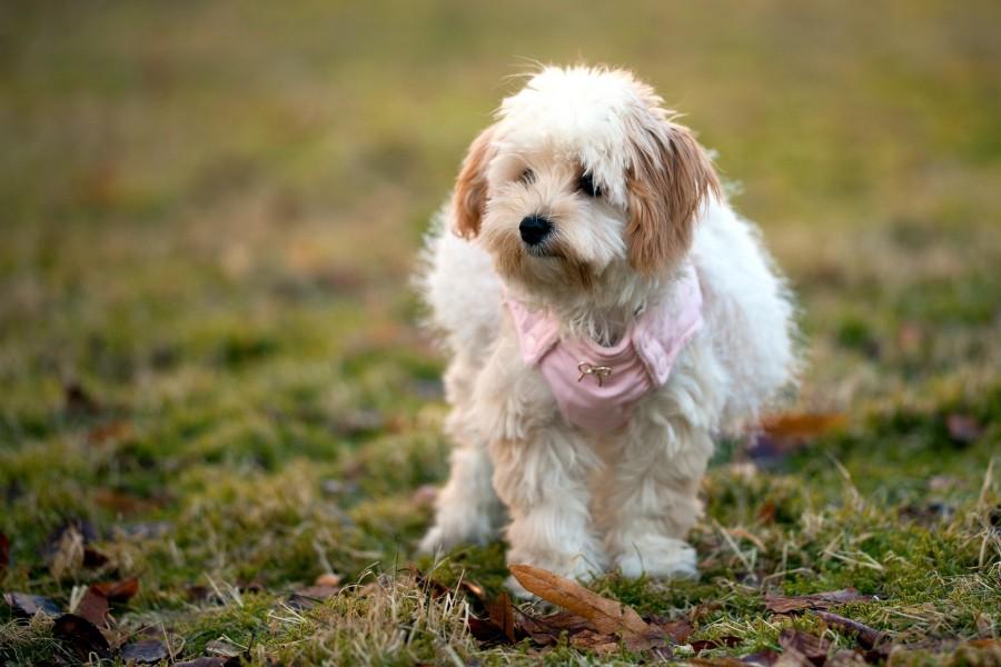 Hermosa perrita sobre la hierba