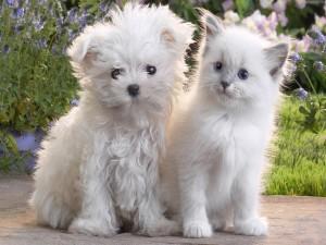 Gato y perro de color blanco en el jardín