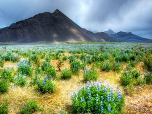 Valle cubierto de flores
