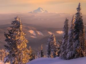 Hermoso paisaje cubierto de nieve