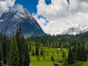 Cabañas y pinos en un valle verde