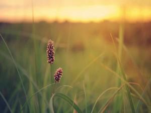 Plantas en el campo
