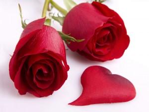 Rosas rojas y un pétalo con forma de corazón
