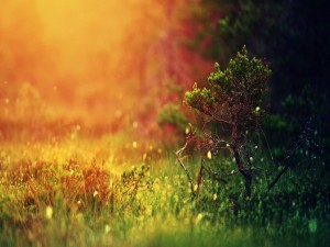 Pequeño árbol creciendo sobre la hierba