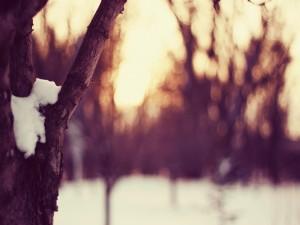 Nieve en la rama del árbol