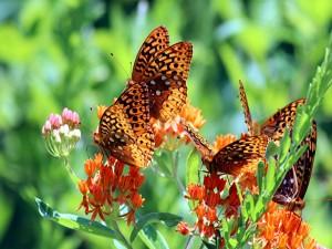 Mariposas posadas en las flores