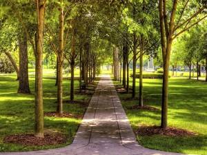 Camino entre los árboles de un parque