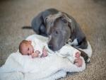 Perro cuidando a un bebé