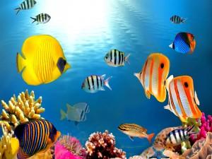 Peces nadando sobre el arrecife de coral
