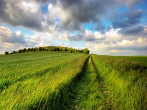 Camino en el campo verde