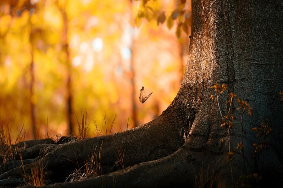 Mariposa volando junto al tronco de un árbol