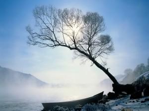 Barca junto a un árbol
