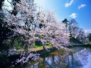 Árboles en flor a orillas del agua