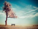 Banco junto a un árbol