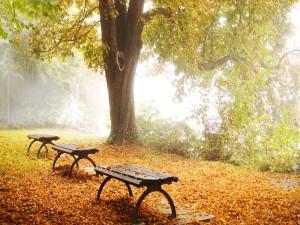 Bancos bajo un árbol otoñal