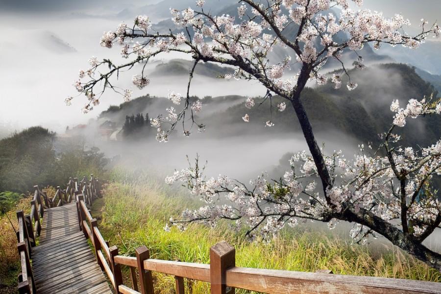 Árbol en flor junto a unas escaleras de madera