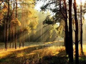 Sol iluminando el bosque