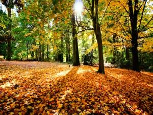 Sol iluminando el bosque en otoño