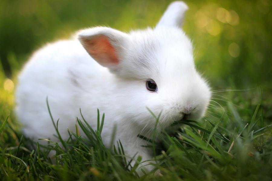 Conejo comiendo hierba verde