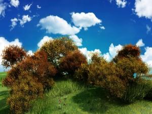 Arbustos sobre la hierba