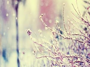 Nieve cayendo sobre un arbusto