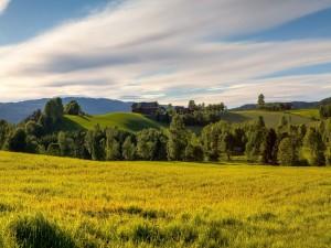 Casas en la colina verde