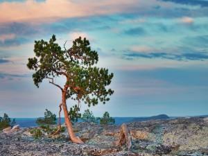 Árbol creciendo sobre una gran roca
