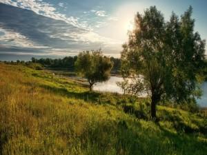 Árboles a orillas del lago