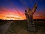 Gran árbol desnudo visto al amanecer