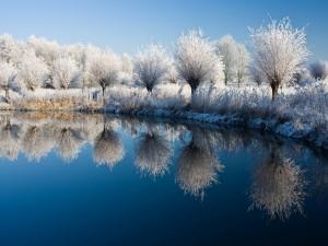 Árboles blancos reflejados en el lago