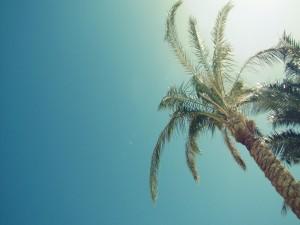 Gran palmera iluminada por el sol