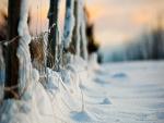 Nieve junto a una valla