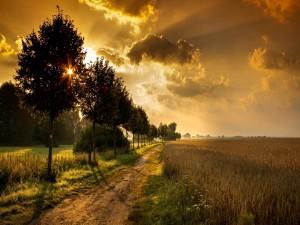 Camino soleado