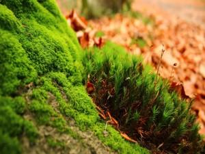 Musgo y plantas junto a hojas otoñales