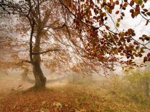 Niebla junto a un gran árbol otoñal