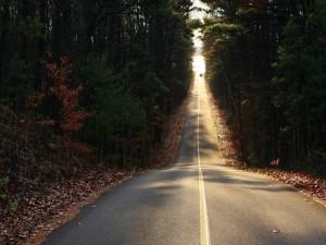 Carretera entre árboles iluminada por el sol